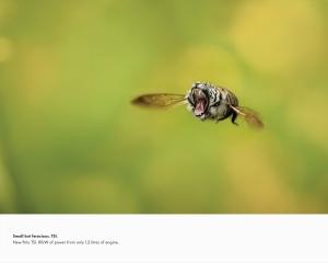 【ADS】フォルクスワーゲンの[Small but ferocious]キャンペーンが面白いです。