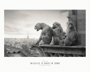 【ADS】パリ動物園のキャンペーン広告[Wildlife back in Paris]を紹介します。
