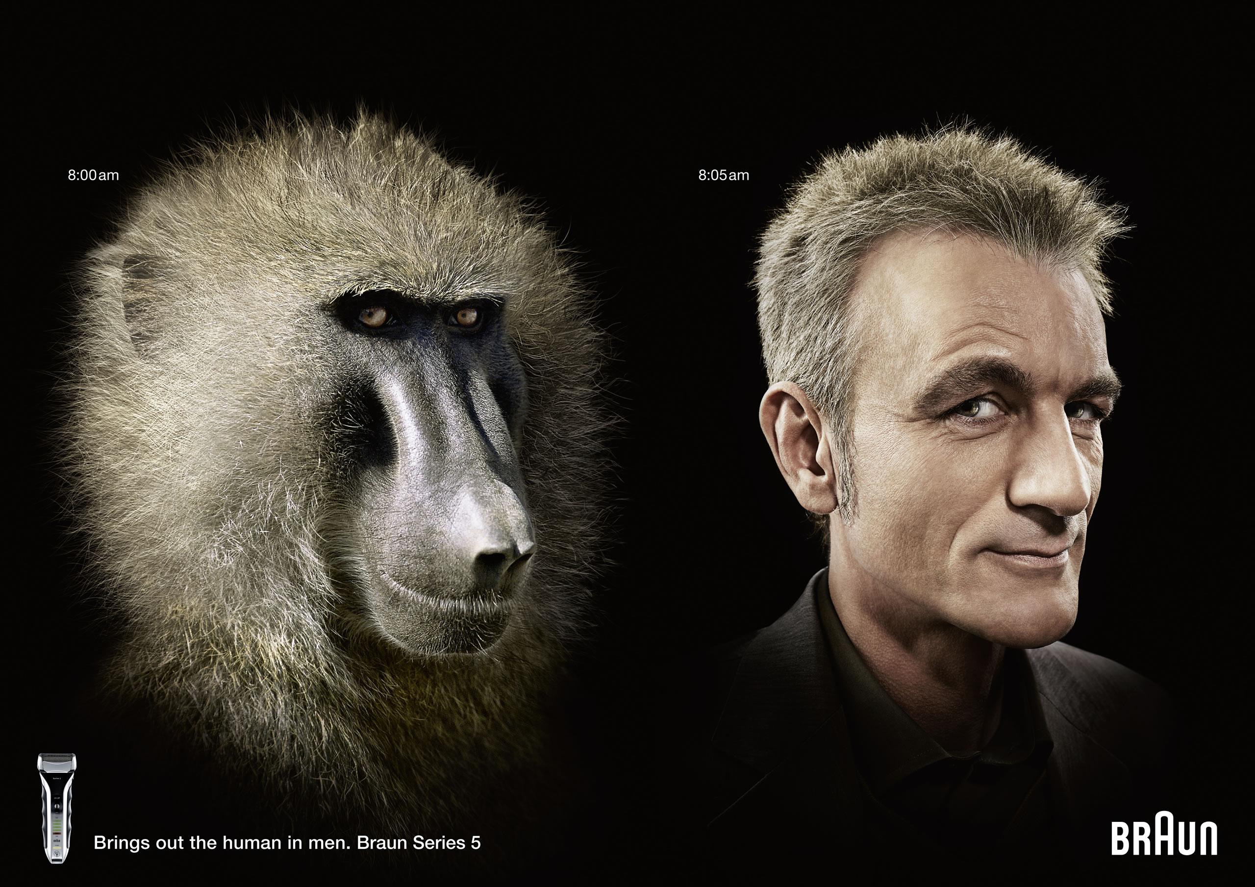 braun-baboon
