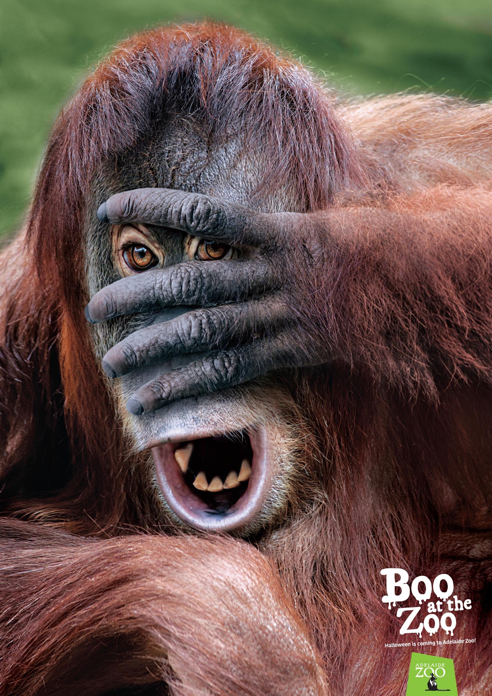 アデレード動物園:ADELAIDE ZOO:オランウータン